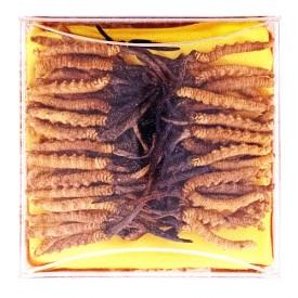 Ah Pau Premium Cordyceps (西藏冬虫夏草)