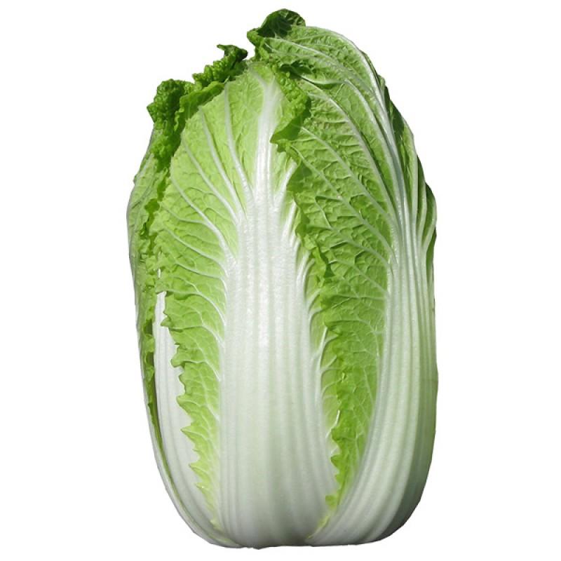 Cabbage Chinese, Wong Bok