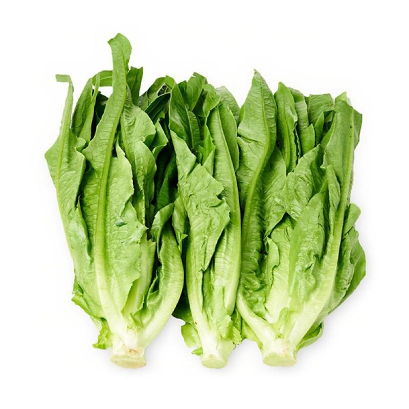 Lettuce Romanine (Yau Mak)